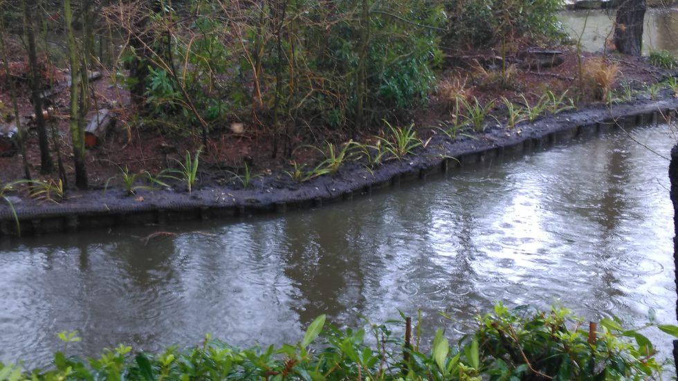 IMAG0352 coy pond planted