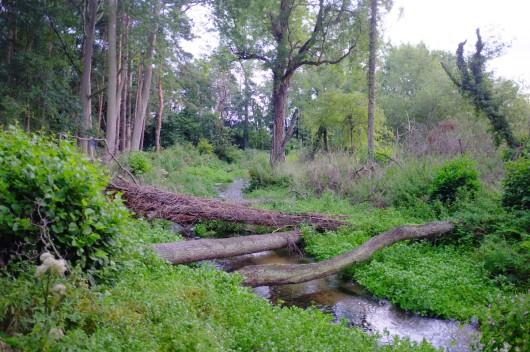 Nar logs in summer 1200